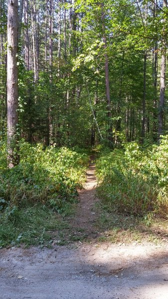 The entrance to the marked loop starting off with the Singletrack bypass option