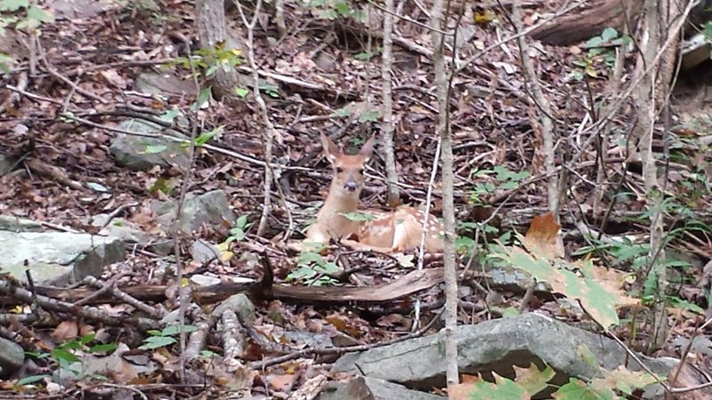 Baby deer on the side of the trail near the cliff/waterfall on McKay Hollow Trail