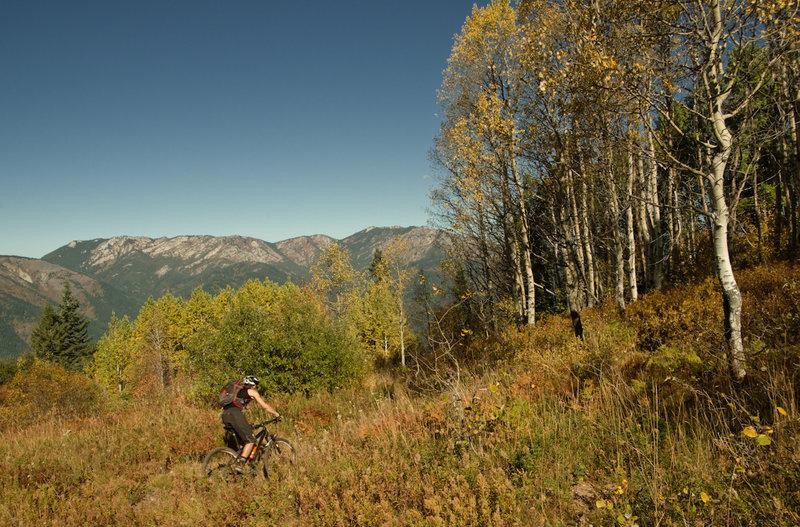 Aspens on Bear Butte Saddle.