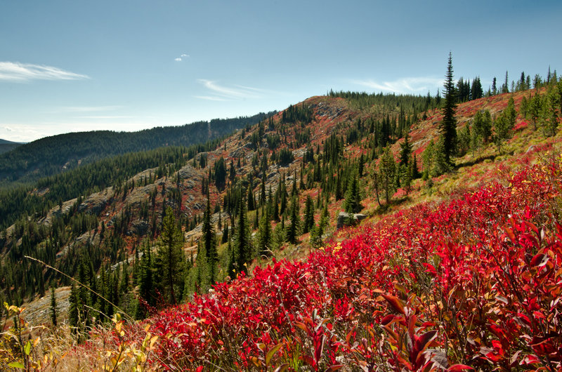 Fall colors on Windy Ridge.