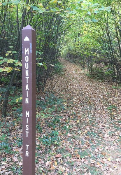 Mountain Mist & Musser Gap trails intersect