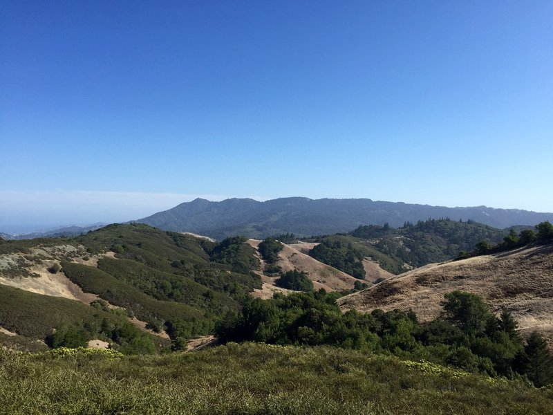 looking south towards Mt Tam from high atop Pine Mtn