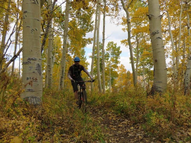 Aspen groves along Scotty's Trail.