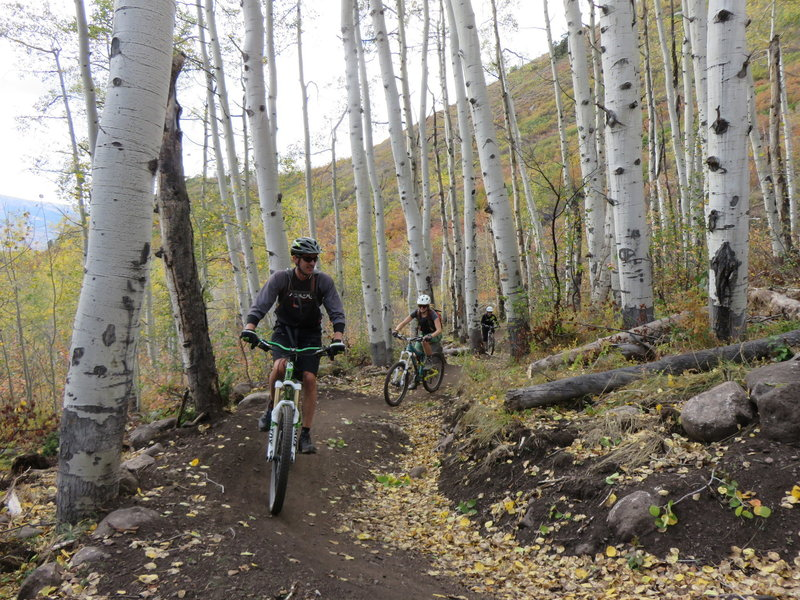 Gaining elevation on the way up through the aspen grove on lower Hummingbird Trail.