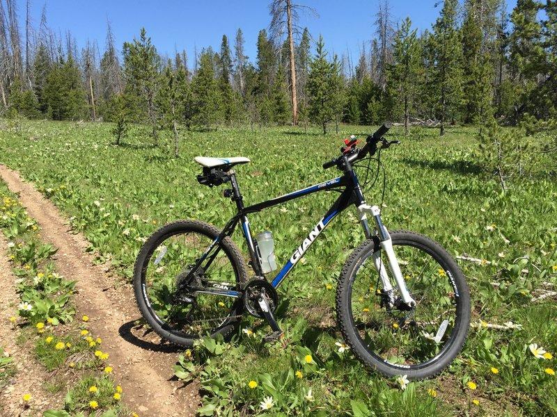 Meadow on Elk Mountain Loop.