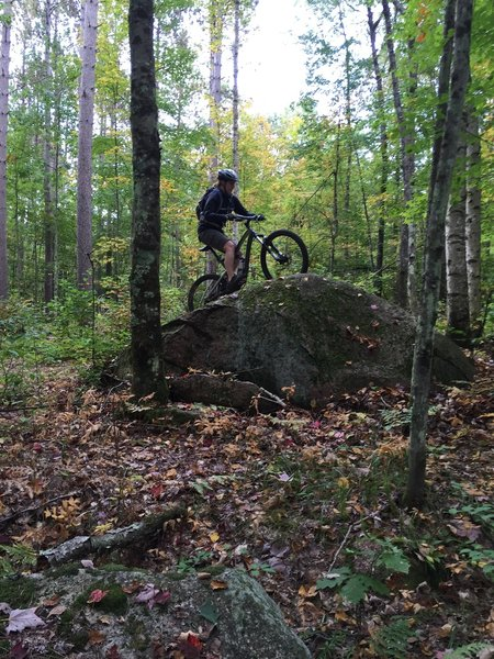 One of the smaller boulders that define the technical features of this trail.