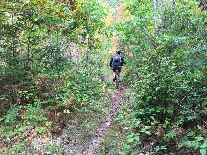 Singletrack through the forest.