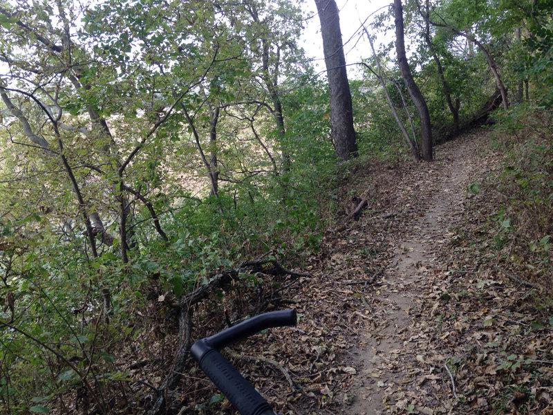 Singletrack through the woods.