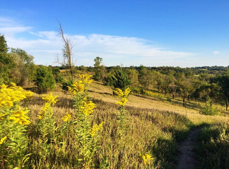 Top of the prairie section of the Bacon Creek Trail, looking southeast.