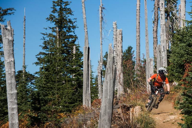 Bluebird Fall riding on Trail 140.