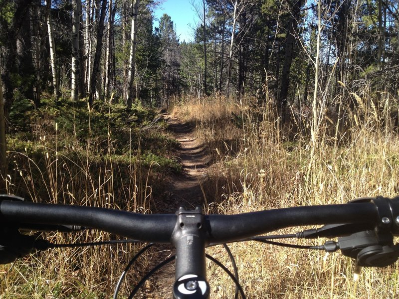 There are some stretches of singletrack to be found around Homestead Meadows