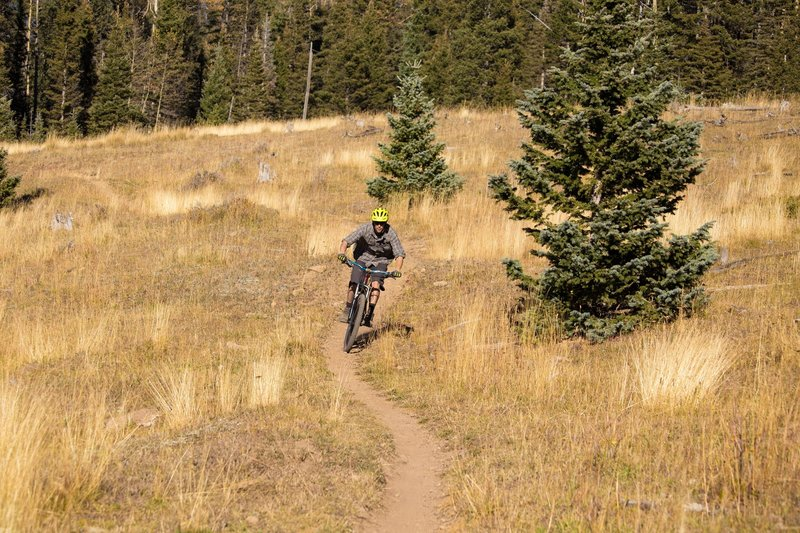 Fast and smooth section of trail in the Corner Park meadows.  Taking advantage of the late autumn warm and dry spell.