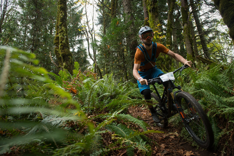 Ian Schmitt racing between the ferns on the Upper Ridge Trail.