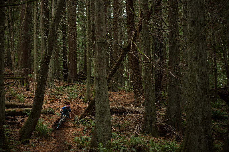 Matthew McCluskey winds his way through one of the area's neatest forests.