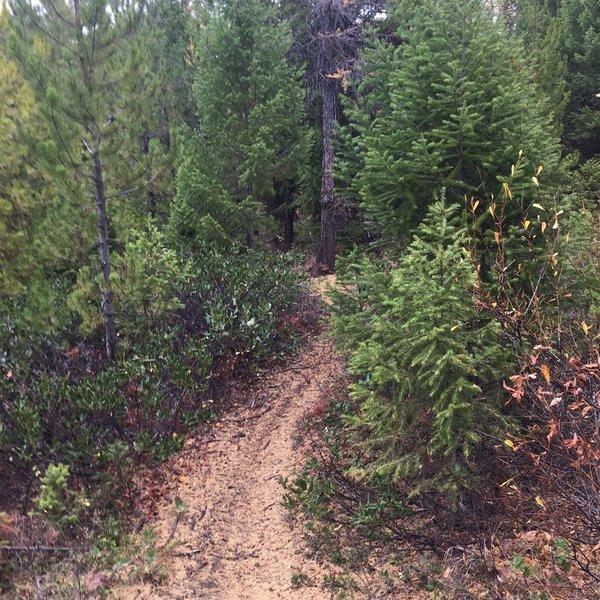True woodland flow near Howard Creek!