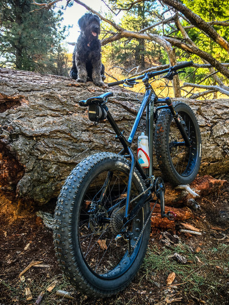 The Sweet Sweet Connie trail, pictured with fat bike, big log, and cute dog.