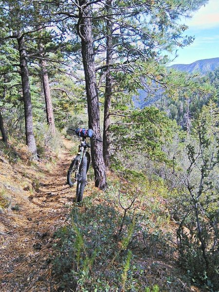 Middle section of South Baldy is all in the pines.