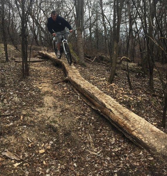 "Riding the ""B"" line down the Log Skinny at Bertram."