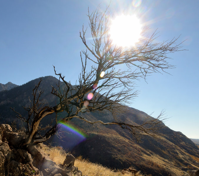Reaching for the sun at the Ogden Canyon Overlook.