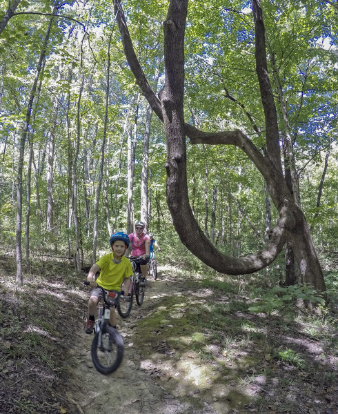 Sycamore Ridge is a great trail for all ages and skill levels.