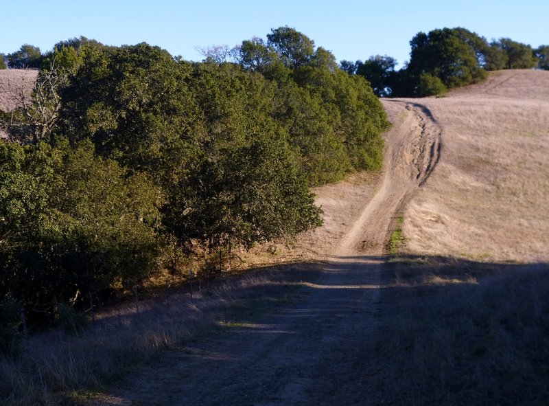 "Briones Crest ""Trail"" section is an example of poor trail and land management. This eroded section should be restored and rerouted and is one of too many examples."