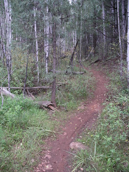 Aspens and roses on Quaking Aspen Trail.