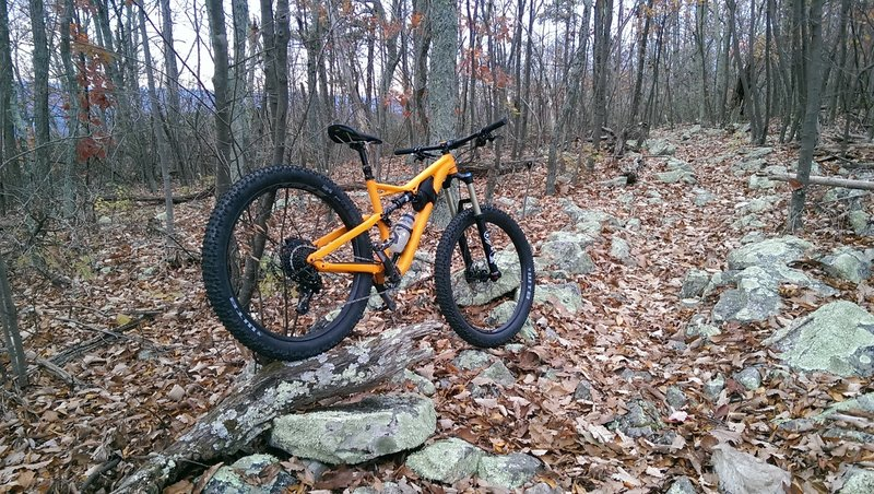 A bike leaning against a tree at the top of Bear Wallow.