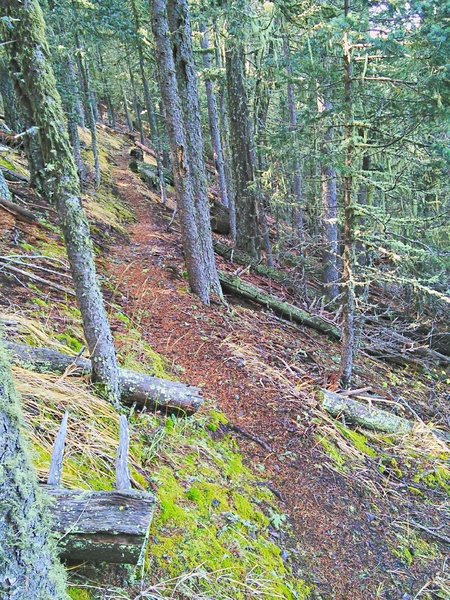 This section of North Baldy Trail #8 is in thick trees