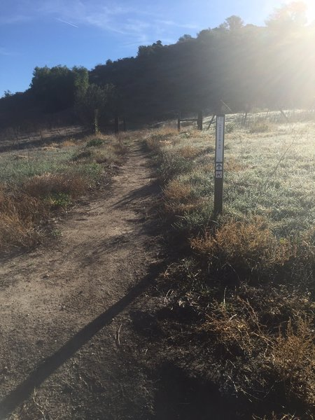 The beginning of the singletrack portion of Shoestring.
