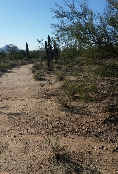 Typical trail section.