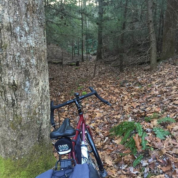 Powder Mill Trail. Very technical in sections.