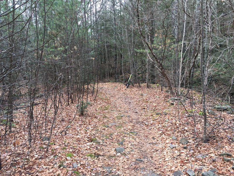 Wide, sometimes rocky, doubletrack main trail.