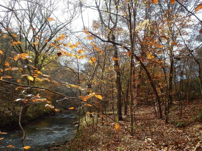 The trail along East Armuchee Creek.