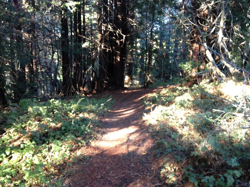 Entrance to the Old Cabin trail.