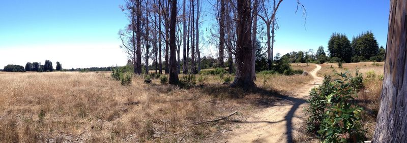 Looking westward at the stand of trees from the Eucalyptus Loop trail. Beyond those trees is a resting area with park benches.