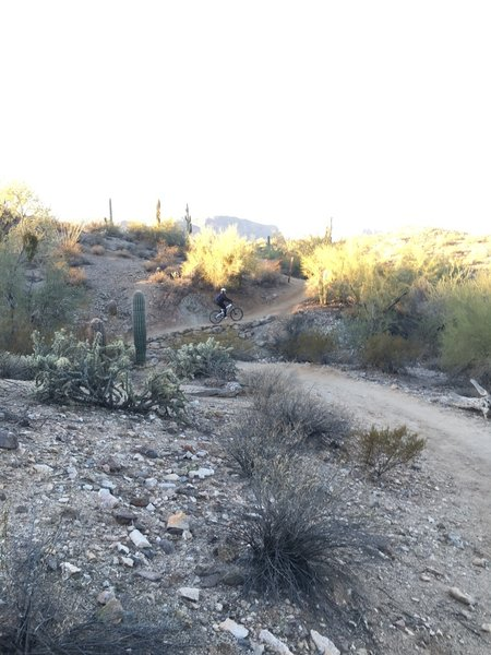 Several tight switchbacks, which are easily rideable, are located along this section of trail .