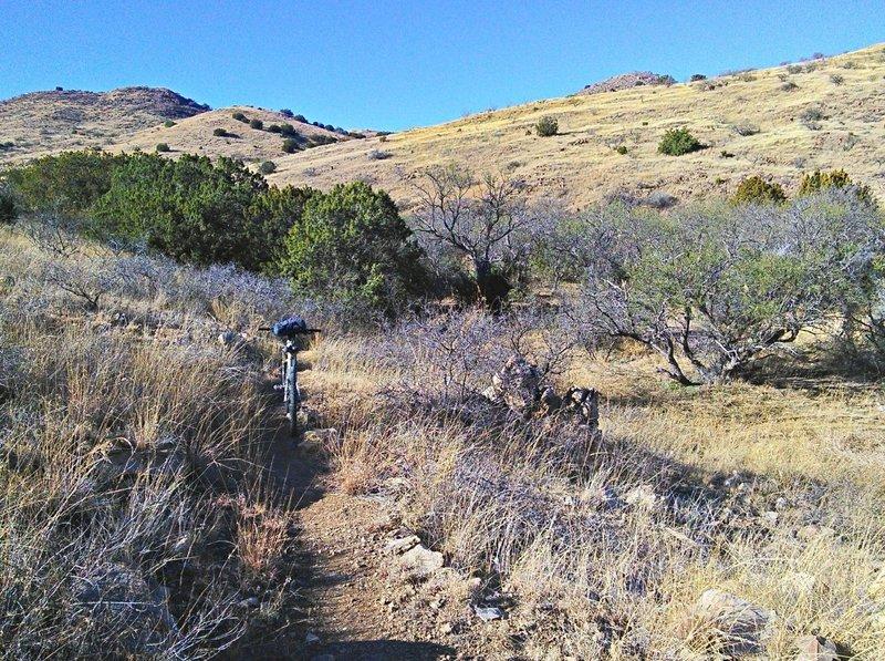 Climbing through scrub trees and grassland.