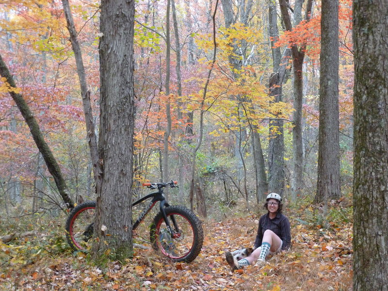 Colorful leaves on Caretaker Trail.