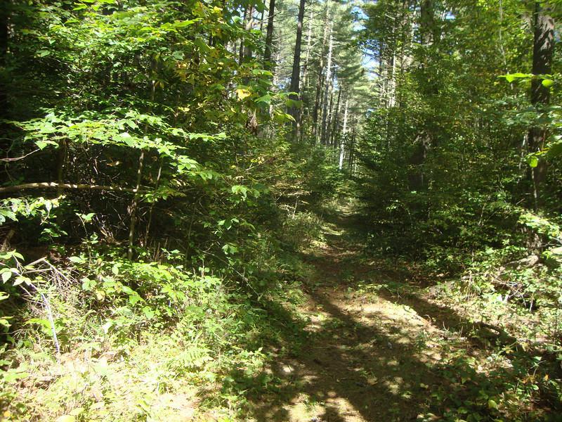 Pine Forest deep in Lucas Hollow.