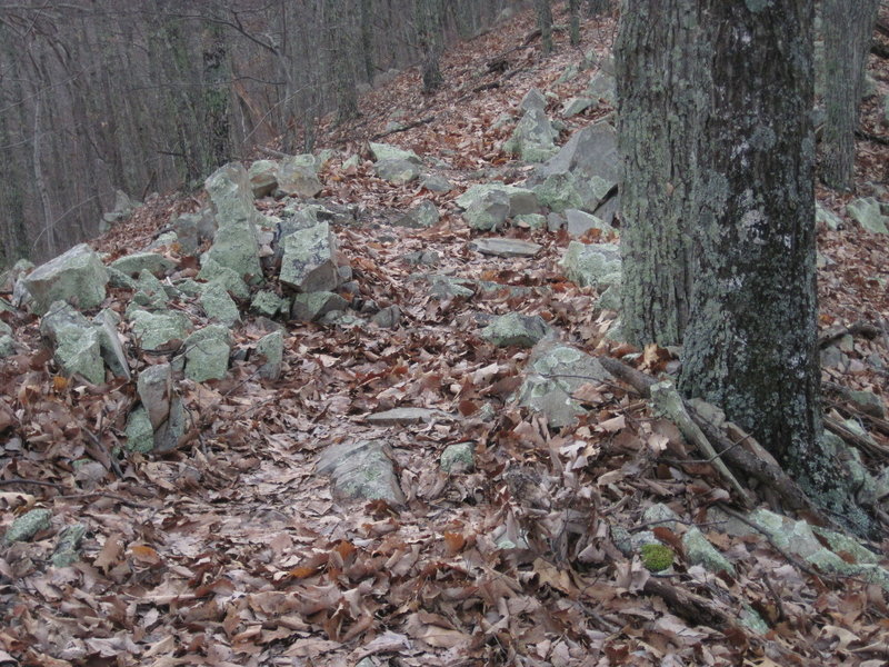 Coming down, you get back into the hardwoods with gnar on the singletrack.
