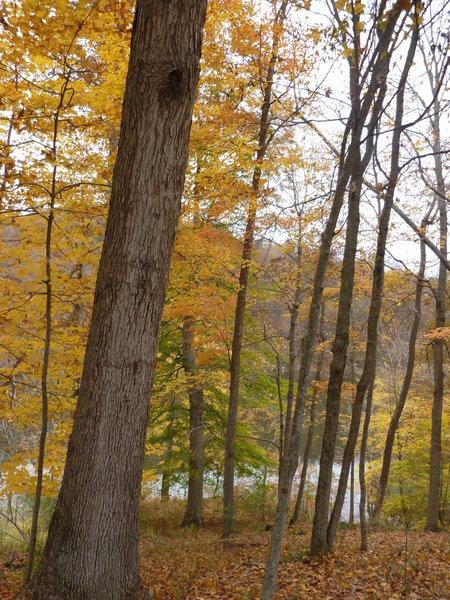 Lake Trail view.