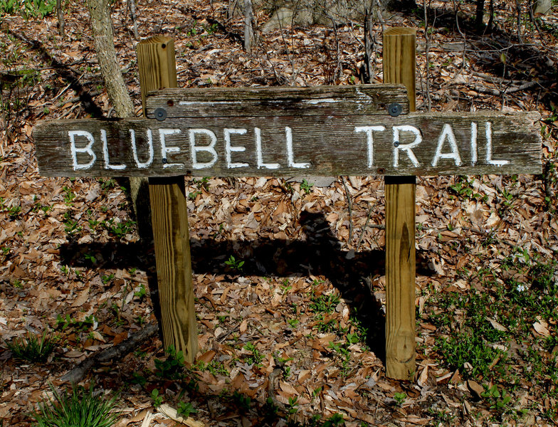 Bluebell Trail sign.