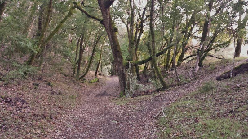 Upper Canyon Trail on Stevens Creek.