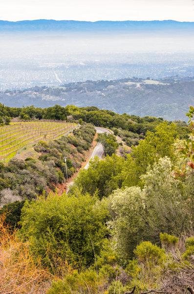 Ridge Vineyards.