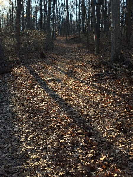 The Gravity Trail consists of mainly doubletrack, as shown in this photo, and some scattered sections of singletrack.