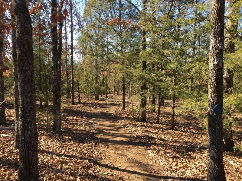 This whole section of the trail is on top of the hill; no real elevation change, but a great trail through the woods