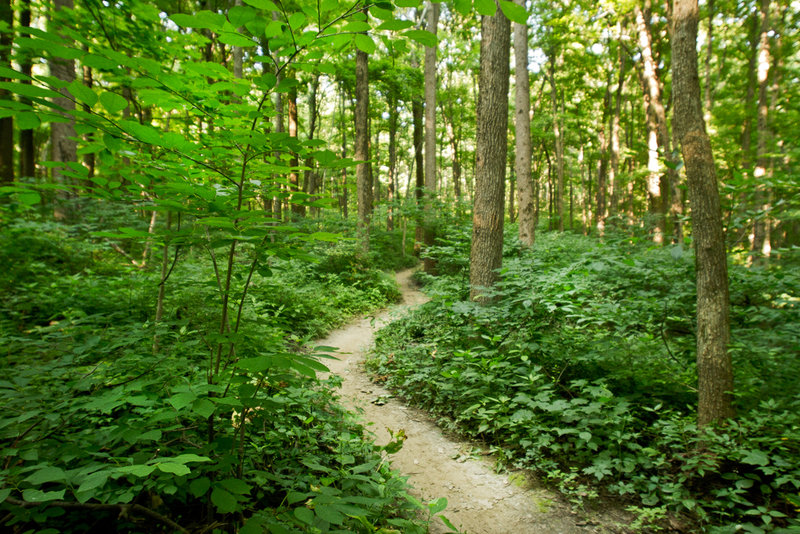 The greens of Lawrence Creek Trail at Fort Benjamin Harrison State Park.