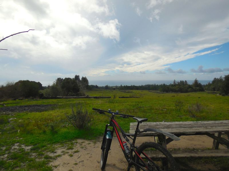 View of the meadow and Monterey Bay at the top of Eucalyptus Loop