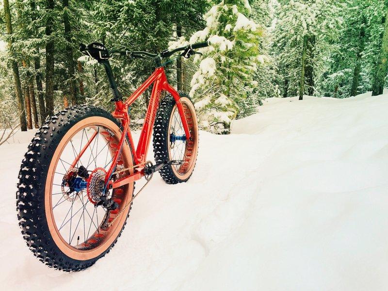 Fresh snow on the Lodgepole Loop.