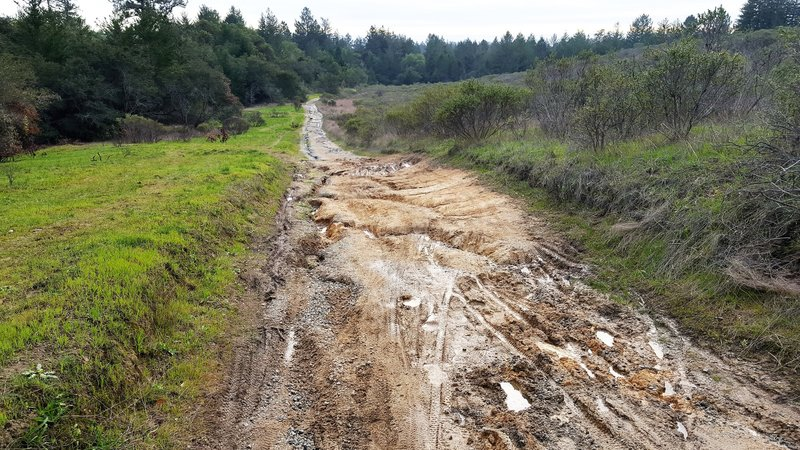 Worst of Wilder Ranch - old rutted ranch road.